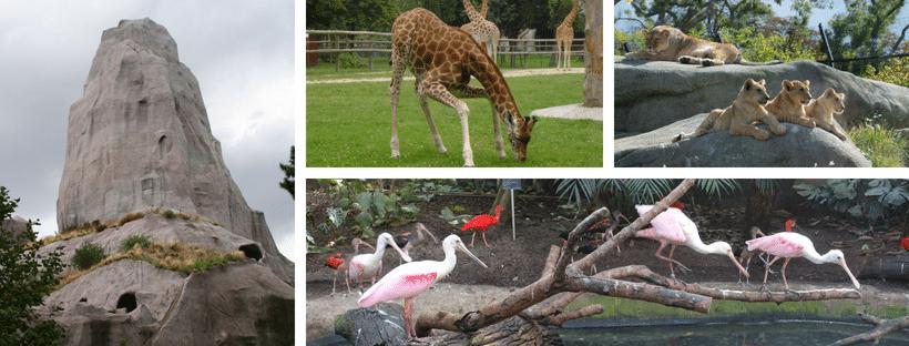 Z'animals in Paris 3